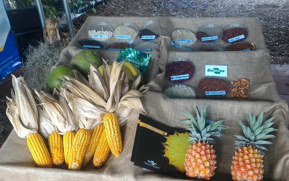 Tecnoshow 2017 tem exposição de diferentes sementes e frutos (Foto: Vanessa Martins/G1)
