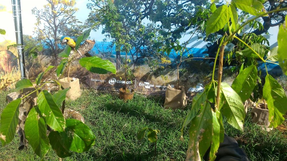 Público pode conferir informações sobre os biomas de diferentes áreas do Brasil (Foto: Vanessa Martins/G1)